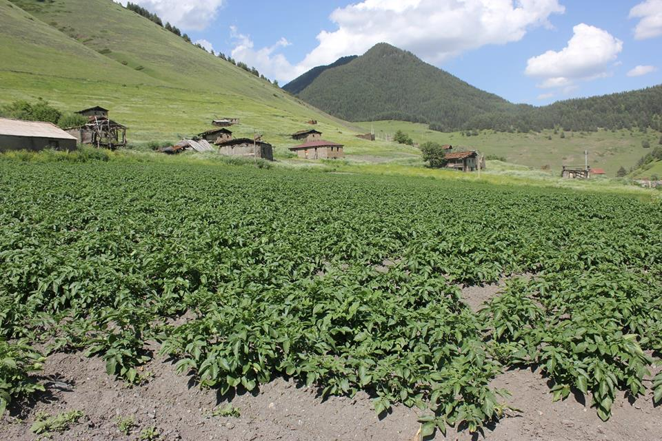 Supporting Smart Agriculture Development in Remote Areas of Village Shenako, Tusheti (Akhmeta Municipality)